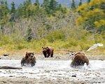 Brooks Lodge - Bärenbeobachtung - Brooks Camp / Katmai Nationalpark
