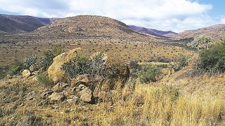 Mountain Zebra Main Camp