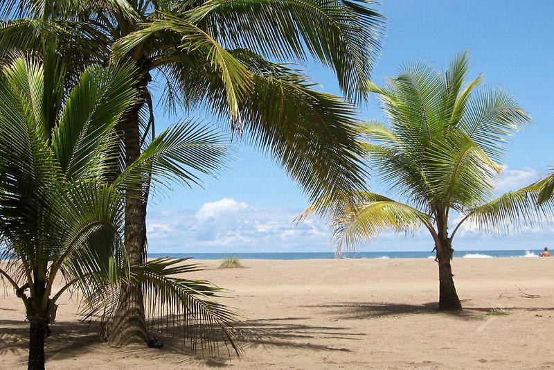 Pochote Grande in Jacó, Costa Rica - weitere Angebote S