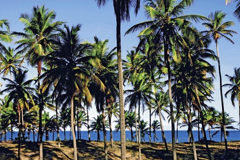 Grand Palladium Imbassai Resort & Spa Strand