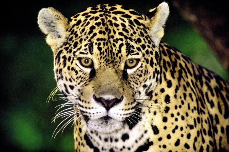 Amazon Village Jungle Lodge Tiere