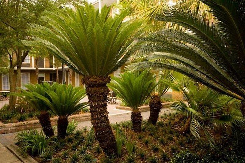 Maison Saint Charles Hotel & Suites  Garten