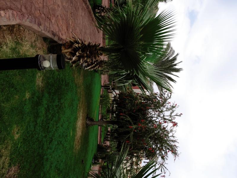 Tropitel Dahab Oasis Garten